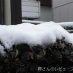 雪です!つもりました~
