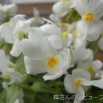 母の日にお花をもらいました♪